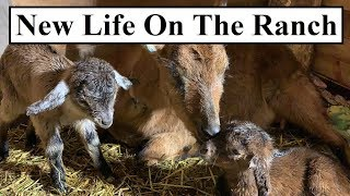 #400 - Life, Death And An Earthquake On The Homestead
