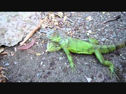 Nicaragua Abr. 11 , Part I