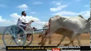 Bullock Cart Racing competition starts in Tamil Nadu and Theni