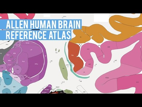Allen Human Brain Reference Atlas | Fly-through