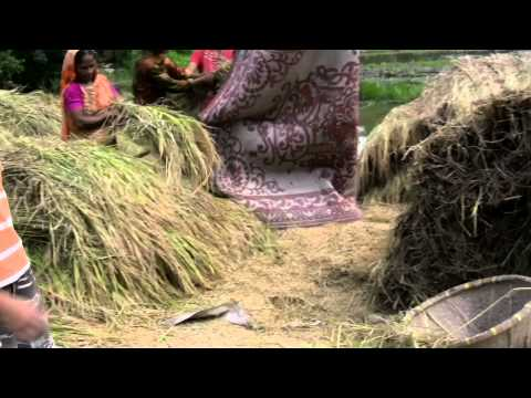 Rice processing machine from Bangladesh in action