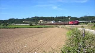 Comboio de Madeira n.º 56260 - Reveles
