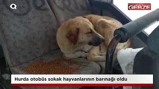 Hurda otobüs sokak hayvanlarının barınağı oldu!