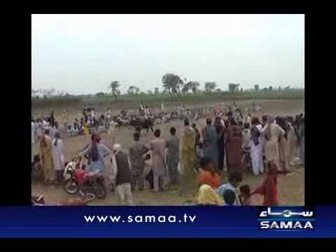 Bull race in Naushehro Feroz. Reported By Samaa