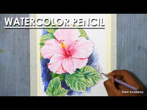 Watercolor Pencil : A Composition on Hibiscus Flower
