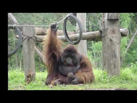 26 Chaing Mai Zoo + Panda Center  Northern Thailand