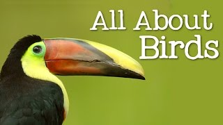 All About Birds for Children: Animal Learning for Kids - FreeSchool