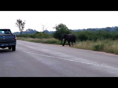 Elephants crossing at Kruger Park