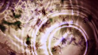 Bibio - 'Silver Wilkinson' Album Sampler