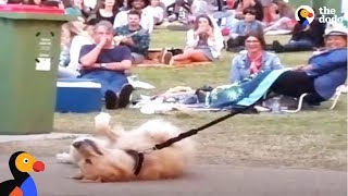 Dog PLAYS DEAD to Avoid Going Home While Park Crowd Watches | The Dodo