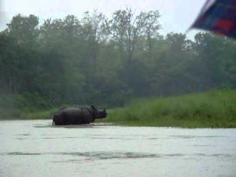 Rinoceronte negro en parque nacional Chitwan, Nepal