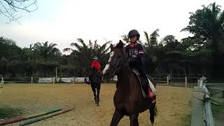 Horse riding practice. Canter session
