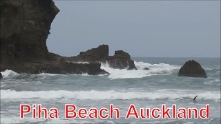 The waves and seagulls, Piha beach