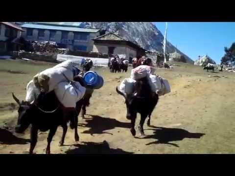 Trekking im Khumbu-Himal (Teil 6)