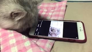 My Cat Watch the Desert rain frog Video