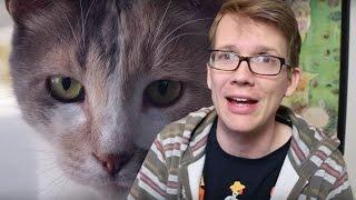 Seeing Myself Through a Cat's Eyes