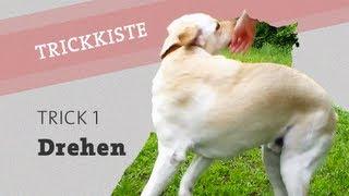 HUNDETRICK: Hund DREHEN beibringen