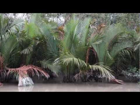 Inside of SUNDARBAN: Thrilling Sundarban Travel festival of XPLORE BANGLADESH