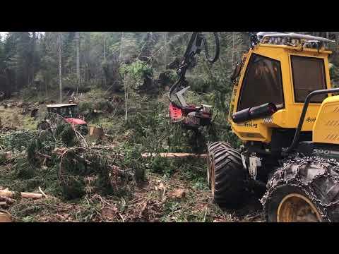 Il legno della Val Visdende, dopo la tempesta Vaia