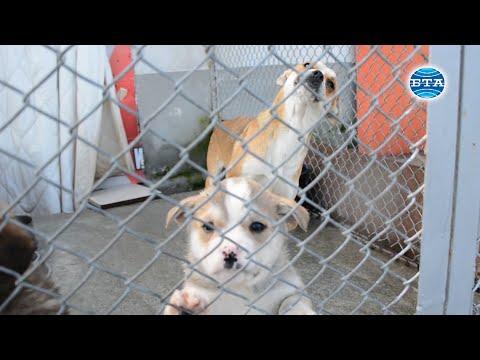 BTA: Кучета от приюта в Благоевград ще могат да бъдат осиновявани в чужбина