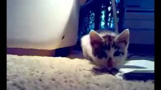 little tomcat Viliam hunting my camera