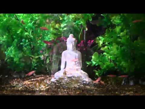 Magical fish tank with Buddha statue