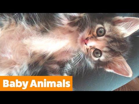 Cute Baby Animal Bloopers | Funny Pet Videos