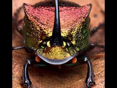 ~~神奇的昆蟲世界~~ - YouTube