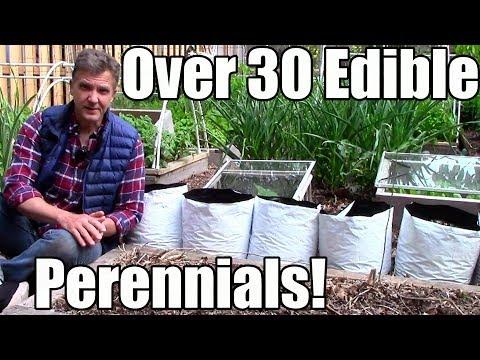 Over 30 Edible Perennials in a Small Garden!