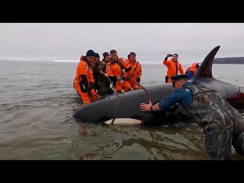 No comment: Delfint mentettek Oroszországban