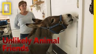 Just a Bit of Donkey Love   Unlikely Animal Friends