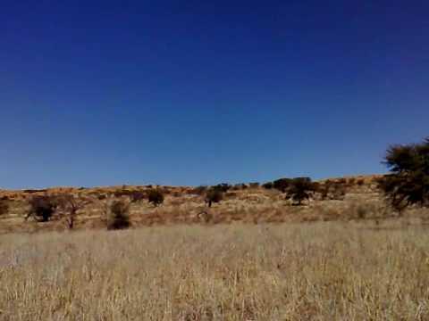 Kgalagadi Transfrontier Park , Sudafrica – Part 4.