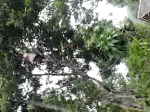 Download Video Bugil Di Hutan