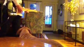 """Dog Sings """"So Real"""" by Michael Tighe and Jeff Buckley"""