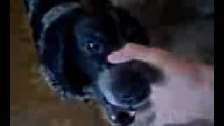 Remix do cachorro