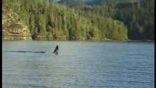 Killerwhales on Vancouver Island