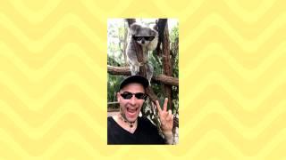 Quebonafide - Koala (prod. Kubi Producent) / Panda remix
