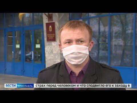 Медведи в Ярославле: невероятные кадры на просторах социальных сетей