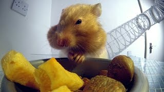 Inside a hamster's cheeks | Pets - Wild at Heart: Episode 1 Preview | BBC One width=