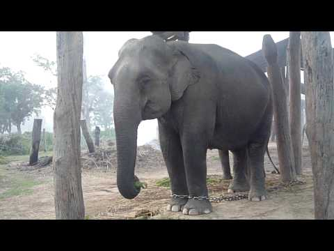 Chitwan-大象也在吃