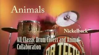 Animals - Nickelback - A Special Presentation (All Classic Drum Covers and Animal Collaboration)