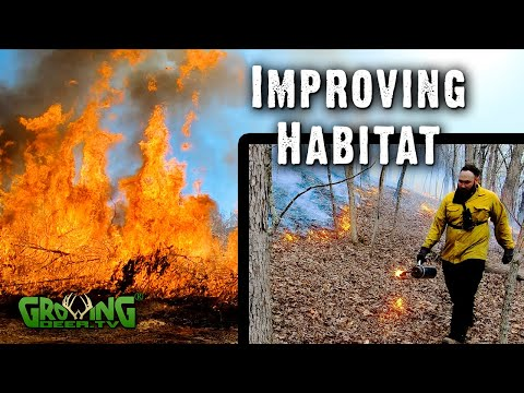 An Incredible Whitetail Habitat Management Tool: Prescribed Fire