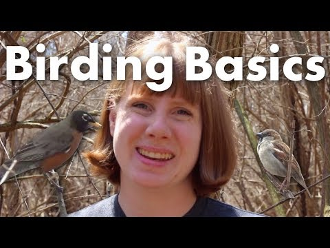 How to start bird watching