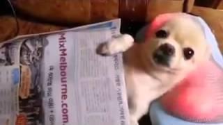 Puppy Massage - Massagem a cachorrinho