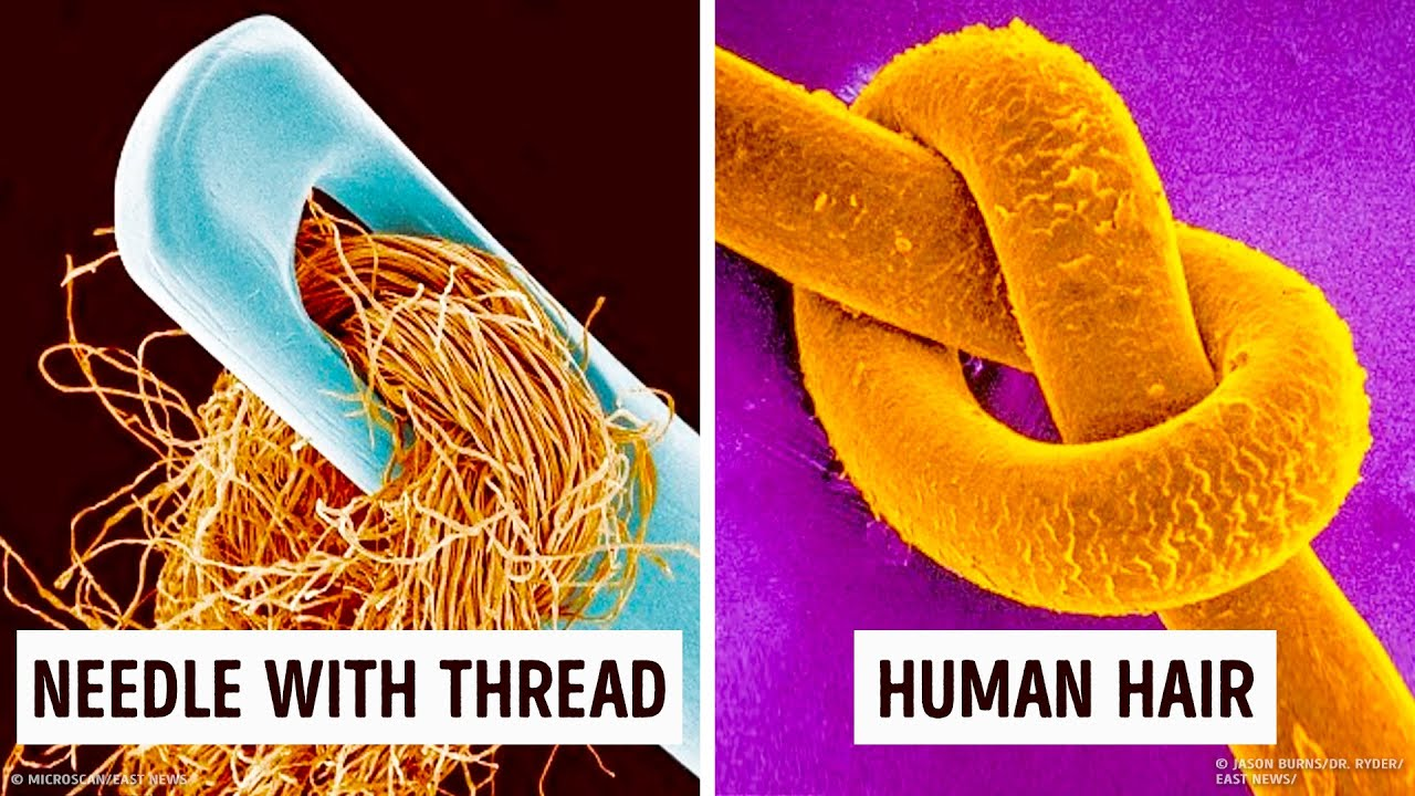 14 Amazing things under a Microscope you can't unsee