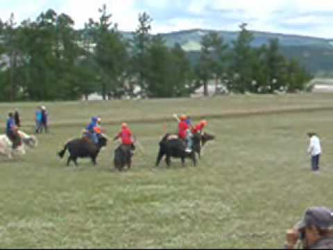 Yak Polo, Mongolia 2010_0001.wmv