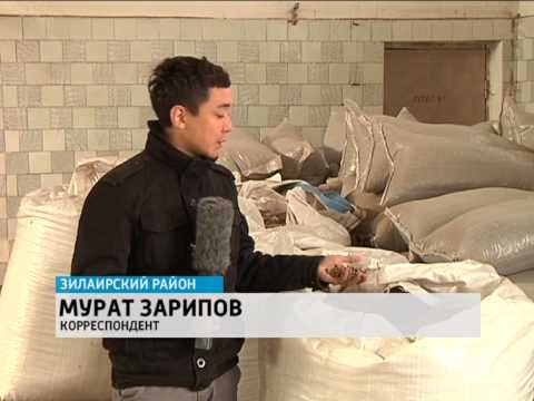 День работника леса отметили в Зилаирском районе Башкортостана