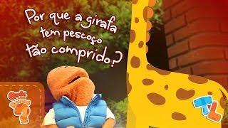 Por que a girafa tem pescoço grande? #Ticolicos|EP37