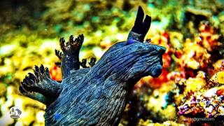 nudibranch slade-show