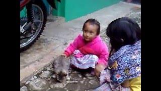 Greedy Cat Ciamis